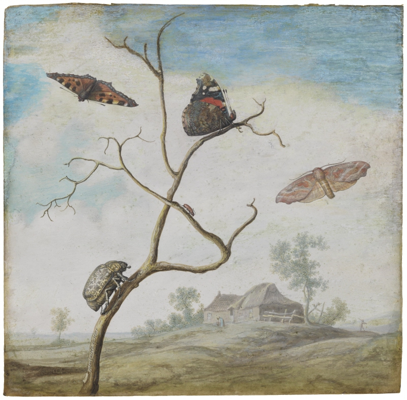 Butterflies and beetles in a landscape