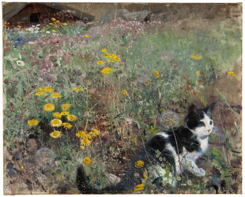 Cat on a flowery meadow